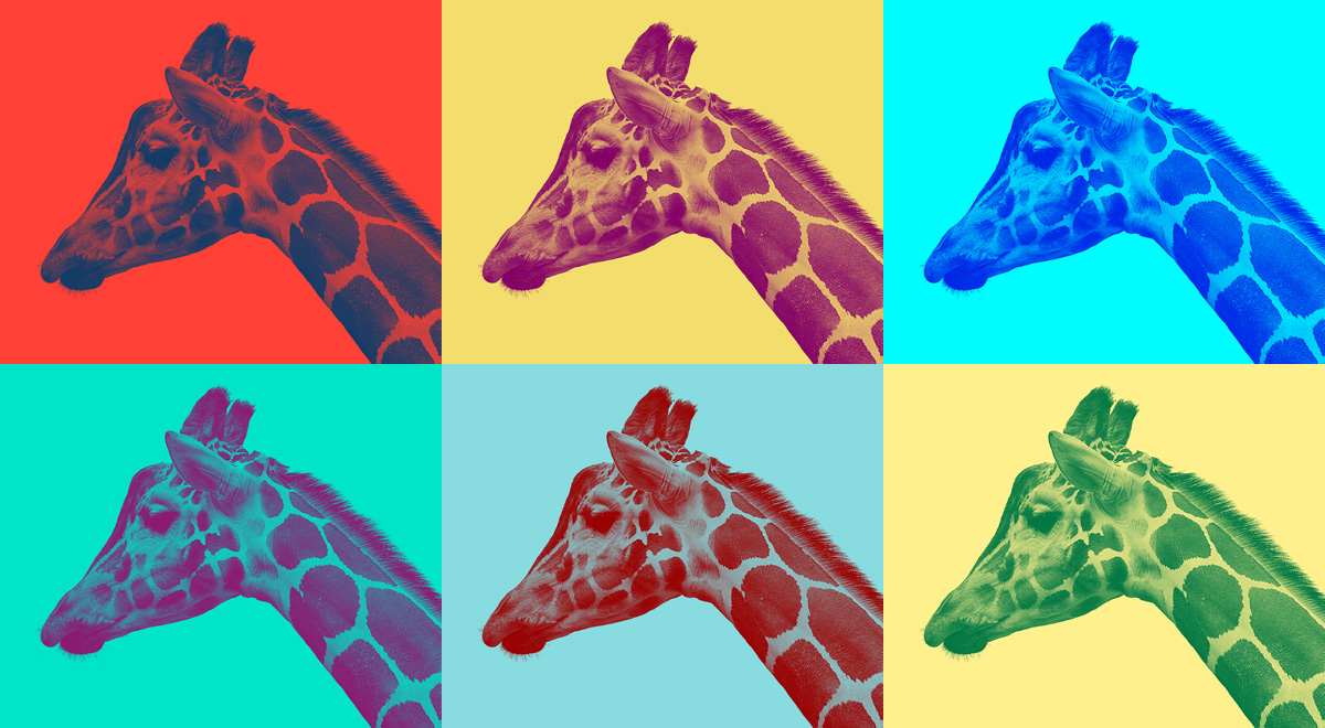 giraffe-color-boxes
